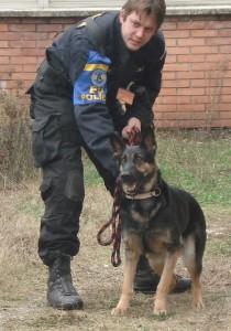 Les chiens du K9 reniflent la marijuana, les douaniers arrêtent les passeurs