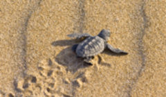 Tortue@Cy