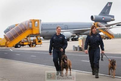 chiens sauveteurs avant le départ (crédit : MOD néerlandais)