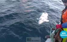 Une baleine, apprentie espionne, découverte au large de la Norvège